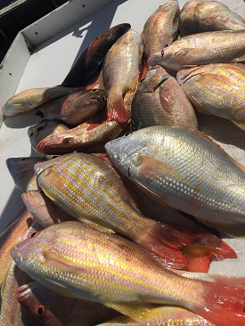 Key West reef Fishing Charters